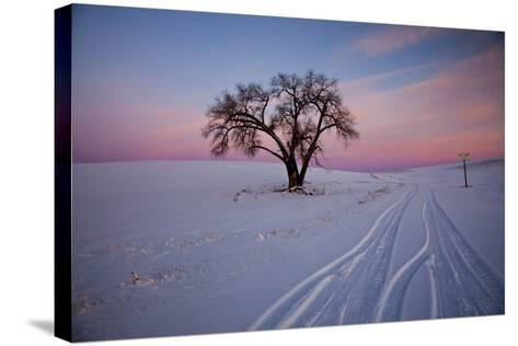 Washington, Sunset Bathed Lone Tree in Snow Covered Winter Field-Terry Eggers-Stretched Canvas Print