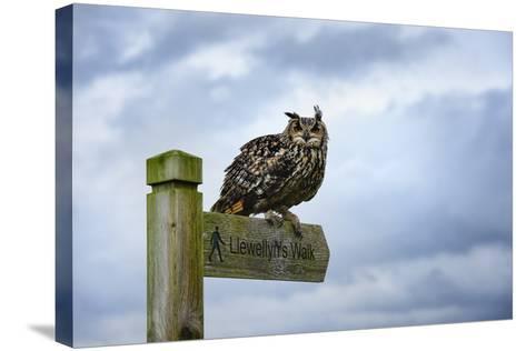 Eagle Owl, Raptor, Bird of Prey on Sign Post for Llewellyn'Swalk, Rhayader, Mid Wales, U.K.-Janette Hill-Stretched Canvas Print