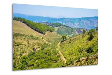 Coffee Plantations in Central Highlands, Lam Ha District, Lam Dong Province, Vietnam, Indochina-Jason Langley-Metal Print