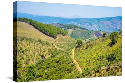 Coffee Plantations in Central Highlands, Lam Ha District, Lam Dong Province, Vietnam, Indochina-Jason Langley-Stretched Canvas Print