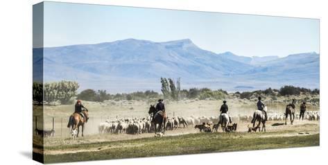 Gauchos Riding Horses to Round Up Sheep, El Chalten, Patagonia, Argentina, South America-Matthew Williams-Ellis-Stretched Canvas Print