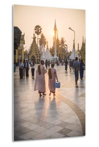 Buddhist Nuns in Pink Robes at Sunrise at Shwedagon Pagoda (Golden Pagoda), Myanmar (Burma)-Matthew Williams-Ellis-Metal Print