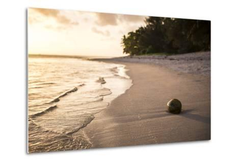 Coconut on a Tropical Beach at Sunset, Rarotonga Island, Cook Islands, South Pacific, Pacific-Matthew Williams-Ellis-Metal Print