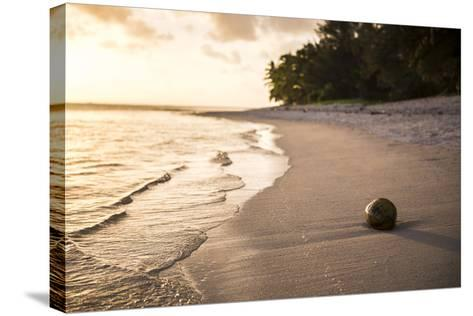 Coconut on a Tropical Beach at Sunset, Rarotonga Island, Cook Islands, South Pacific, Pacific-Matthew Williams-Ellis-Stretched Canvas Print