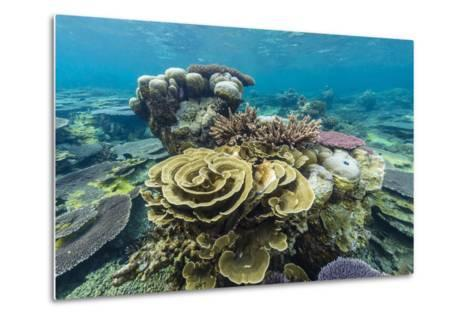 Underwater Reef on a Remote Small Islet in the Badas Island Group Off Borneo, Indonesia-Michael Nolan-Metal Print