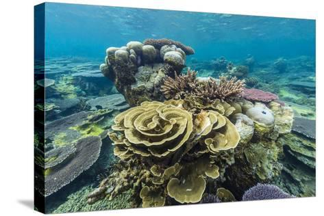 Underwater Reef on a Remote Small Islet in the Badas Island Group Off Borneo, Indonesia-Michael Nolan-Stretched Canvas Print