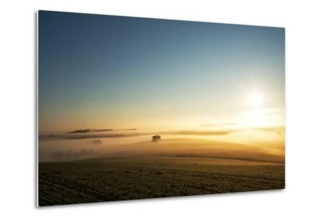 Single Tree in a Stream of Slowly Moving Layers of Mist, Baden-Wurttemberg, Germany, Europe-Andy Brandl-Metal Print