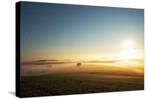 Single Tree in a Stream of Slowly Moving Layers of Mist, Baden-Wurttemberg, Germany, Europe-Andy Brandl-Stretched Canvas Print