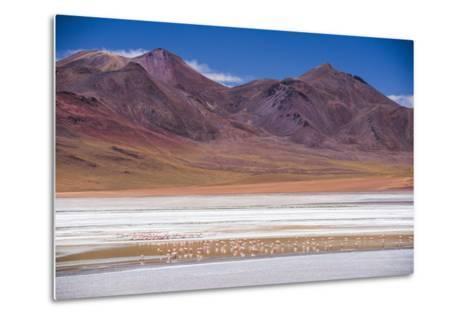 Flamingos at Laguna Hedionda, a Salt Lake Area in the Altiplano of Bolivia, South America-Matthew Williams-Ellis-Metal Print