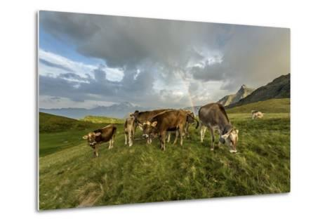 Rainbow Frames a Herd of Cows Grazing in the Green Pastures of Campagneda Alp, Valtellina, Italy-Roberto Moiola-Metal Print
