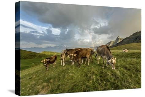 Rainbow Frames a Herd of Cows Grazing in the Green Pastures of Campagneda Alp, Valtellina, Italy-Roberto Moiola-Stretched Canvas Print