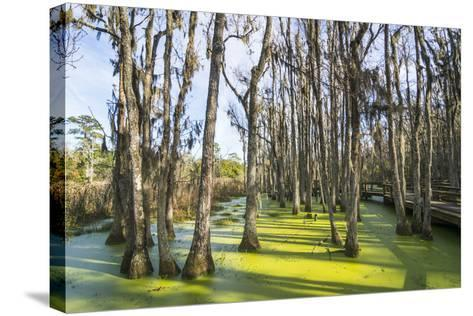 Dead Trees in the Swamps of the Magnolia Plantation Outside Charleston, South Carolina, U.S.A.-Michael Runkel-Stretched Canvas Print