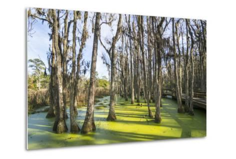 Dead Trees in the Swamps of the Magnolia Plantation Outside Charleston, South Carolina, U.S.A.-Michael Runkel-Metal Print
