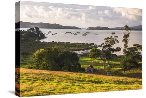 Countryside at Coromandel Town, Coromandel Peninsula, North Island, New Zealand, Pacific-Matthew Williams-Ellis-Stretched Canvas Print