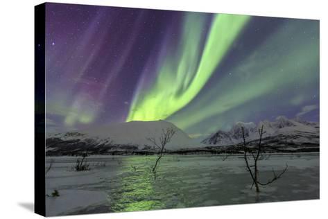 Aurora Borealis on the Frozen Lagoon of Jaegervatnet, Stortind, Lyngen Alps, Troms, Lapland, Norway-Roberto Moiola-Stretched Canvas Print