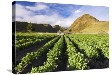 Farmland at the Base of Illiniza Norte Volcano, Pichincha Province, Ecuador, South America-Matthew Williams-Ellis-Stretched Canvas Print