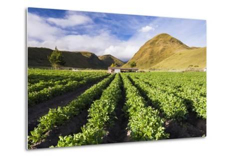 Farmland at the Base of Illiniza Norte Volcano, Pichincha Province, Ecuador, South America-Matthew Williams-Ellis-Metal Print