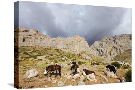 Ala Daglar National Park, Cappadocia, Anatolia, Turkey, Asia Minor, Eurasia-Christian Kober-Stretched Canvas Print