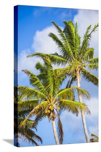 Palm Tree, Muri, Rarotonga, Cook Islands, South Pacific, Pacific-Matthew Williams-Ellis-Stretched Canvas Print
