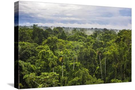 Amazon Rainforest at Sacha Lodge, Coca, Ecuador, South America-Matthew Williams-Ellis-Stretched Canvas Print