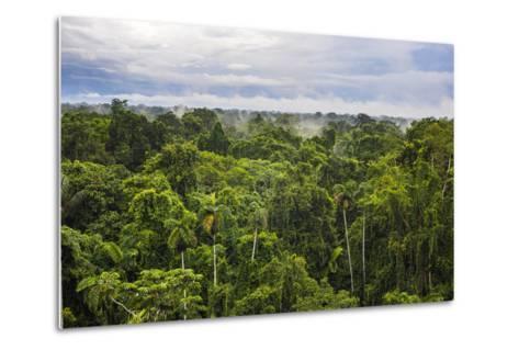 Amazon Rainforest at Sacha Lodge, Coca, Ecuador, South America-Matthew Williams-Ellis-Metal Print