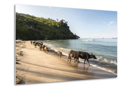 Water Buffalo on the Beach at Sungai Pinang, Near Padang in West Sumatra, Indonesia, Southeast Asia-Matthew Williams-Ellis-Metal Print