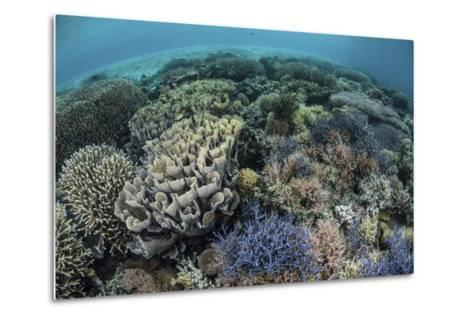 Colorful Corals Near the Island of Alor, Indonesia-Stocktrek Images-Metal Print