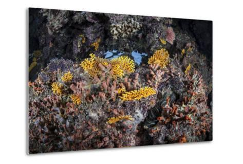 A Colorful Coral Reef Grows Along a Deep Dropoff in the Solomon Islands-Stocktrek Images-Metal Print
