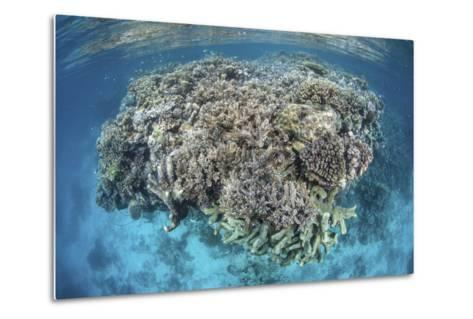 A Diverse Coral Reef Grows in Shallow Water in the Solomon Islands-Stocktrek Images-Metal Print