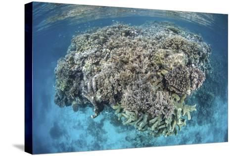 A Diverse Coral Reef Grows in Shallow Water in the Solomon Islands-Stocktrek Images-Stretched Canvas Print