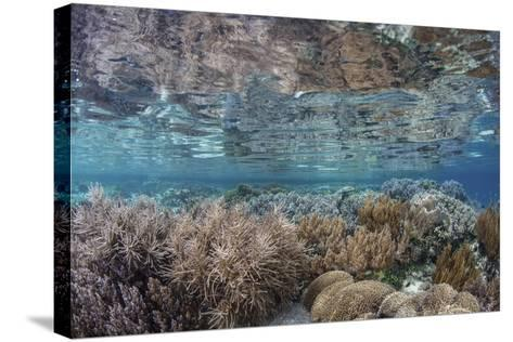 A Healthy and Diverse Coral Reef Grows in Raja Ampat, Indonesia-Stocktrek Images-Stretched Canvas Print
