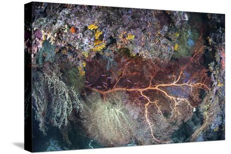 A Colorful Coral Reef Grows Along a Deep Dropoff in the Solomon Islands-Stocktrek Images-Stretched Canvas Print