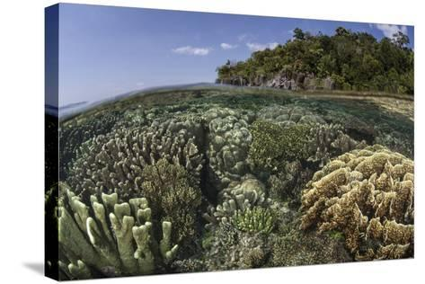 A Diverse Array of Reef-Building Corals in Raja Ampat, Indonesia-Stocktrek Images-Stretched Canvas Print