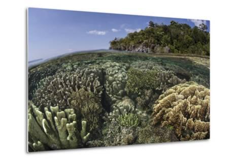 A Diverse Array of Reef-Building Corals in Raja Ampat, Indonesia-Stocktrek Images-Metal Print