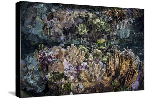 Colorful Reef-Building Corals Grow on a Reef in the Solomon Islands-Stocktrek Images-Stretched Canvas Print