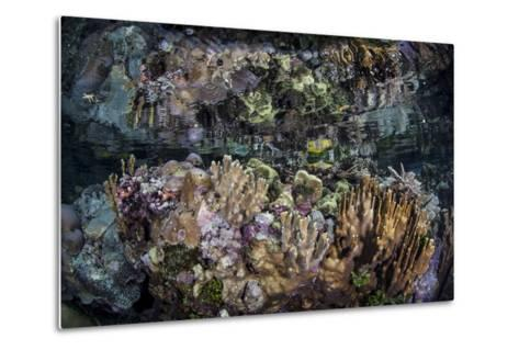 Colorful Reef-Building Corals Grow on a Reef in the Solomon Islands-Stocktrek Images-Metal Print