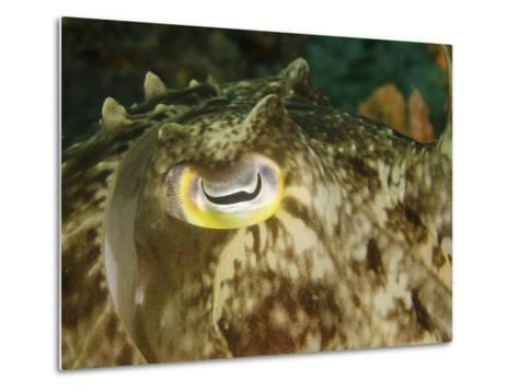 Close-Up of a Cuttlefish Eye, Manado, Indonesia-Stocktrek Images-Metal Print