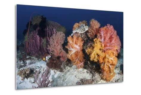 Soft Corals and Invertebrates on a Beautiful Reef in Indonesia-Stocktrek Images-Metal Print