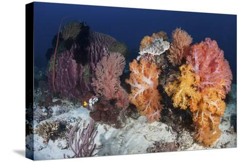 Soft Corals and Invertebrates on a Beautiful Reef in Indonesia-Stocktrek Images-Stretched Canvas Print
