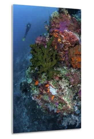 A Diver Hovers Above a Colorful Coral Reef-Stocktrek Images-Metal Print