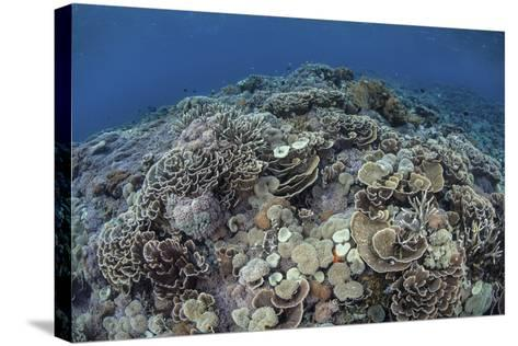 Corals Compete for Space to Grow on a Reef in Indonesia-Stocktrek Images-Stretched Canvas Print