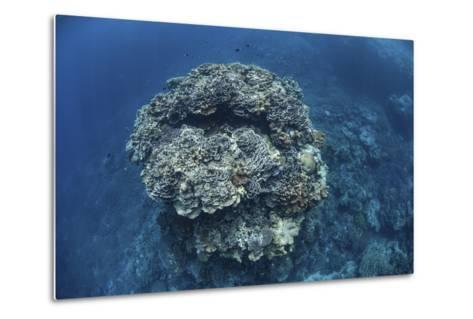A Large Coral Bommie Grows on a Reef in the Solomon Islands-Stocktrek Images-Metal Print