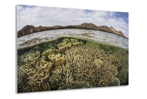 Fragile Corals Grow in Shallow Water in Komodo National Park-Stocktrek Images-Metal Print