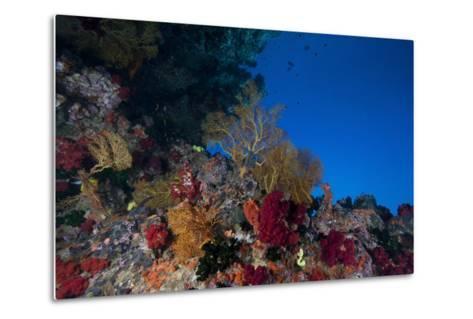 Soft Corals and Gorgonian Sea Fans Adorn a Reef in Fiji-Stocktrek Images-Metal Print