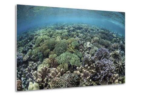A Diverse Array of Corals Grow in Raja Ampat, Indonesia-Stocktrek Images-Metal Print