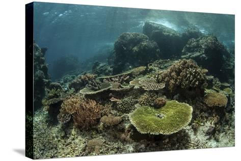 Healthy Reef-Building Corals Thrive in Komodo National Park, Indonesia-Stocktrek Images-Stretched Canvas Print
