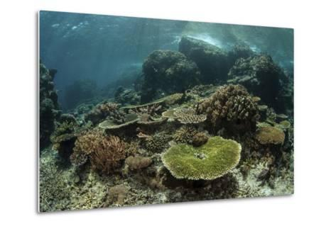 Healthy Reef-Building Corals Thrive in Komodo National Park, Indonesia-Stocktrek Images-Metal Print