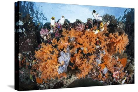 Colorful Soft Corals Grow on a Reef Dropoff in Raja Ampat-Stocktrek Images-Stretched Canvas Print