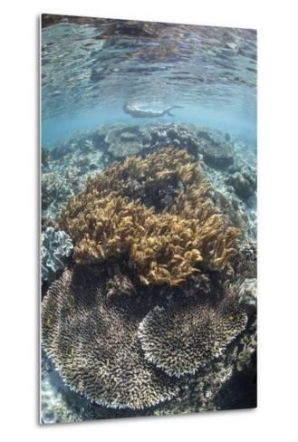 A Snorkeler Explores a Shallow Lagoon in Raja Ampat-Stocktrek Images-Metal Print
