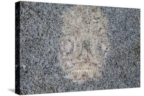 A Stargazer Fish Camouflages Itself in the Sand-Stocktrek Images-Stretched Canvas Print